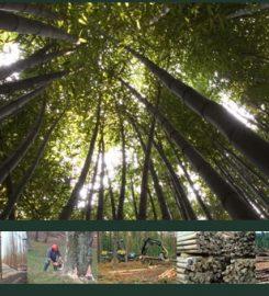 Torres Forestal