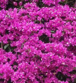 Jardineria Iluntze Taldea S.L.U.